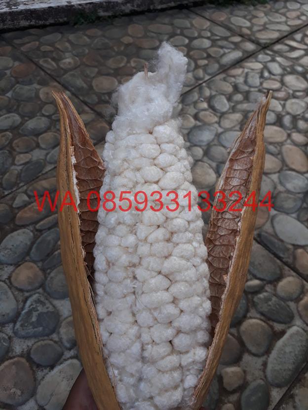 kapok fibre manufacturers